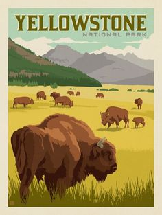 Anderson Design Group – American National Parks – Yellowstone National Park: Bison Herd