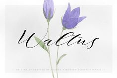Waltus by vuuuds on @creativemarket