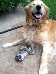 smiling dog and a kitten