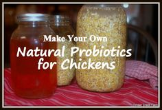 Learn to use lacto-fermentation to get the most nutritional benefits from the feed you feed your chickens. Ways to make natural probiotics for chickens