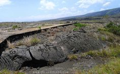 """Pu'u Loa, meaning in Hawaiian """"long hill"""" or """"hill of long life,"""" is a sacred place, located on the south flank of Kilauea volcano, which has more than 23,000 petroglyphs. Hawaiians call this rock art """"Ki'i pohaku"""" or stone image ... which corresponds to the Greek etymology of the name petroglyph, petros / petra or for stone, and glyphein for engraving.  They are mentioned for the first time in 1823 by the Reverend William Ellis, a missionary."""