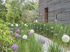 Required Reading: The Private Oasis Gardenista Contemporary, Allium, Bluestone, Grasses, Panicum