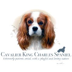 Cavalier King Charles T Shirt by Howard Robinson From Animalden.com