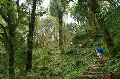 Тропа сквозь джунгли.  Тибетский Новый год и Марди Химал трек., Hikeup
