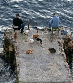 "elorablue: "" Fisherman & Cats by zoonabar on Flickr. """