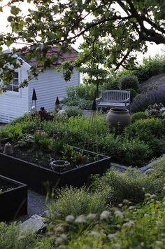 Min trädgård är som vackrast nu   Lantliv.com » Victoria Skoglund   Bloglovin'