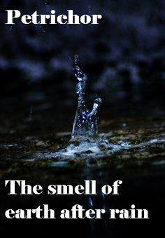 Petrichor: the smell of the earth after it rains. I wonder why no one has bottled this scent up yet?