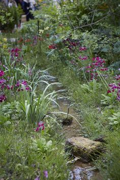 07_Chatsworth_L-P_Garden_photo_Britt_Willoughby_Dyer Cottage Gardens