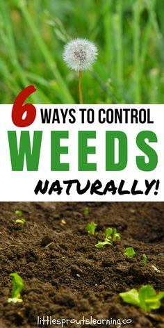 6 ways to control weeds naturally!  Are weeds taking over your garden and yard? The definition of a weed is anything that is growing where you don't want it. There are all kinds of weeds taking over a ton of places I don't want them in our garden. We have tried everything we can think of to cut down on weeding, but it seems like weeds are overtaking every area of the yard.