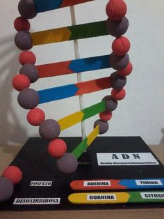 Printing Videos Architecture Home Dna Style Dna Structure Model, 3d Dna Model, Biology Projects, Science Projects, School Projects, Science Fair, Science Experiments, Dna Model Project, Dna 3d