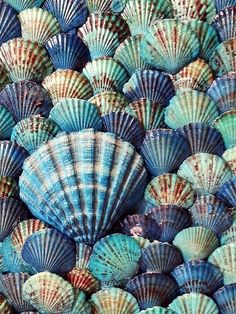 Shades of blue scallop sea shells + Collections + Beachy House Color Pallet.
