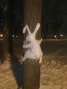 snow bunny...