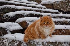This is Peanut Butter. He likes the snow. - Imgur