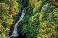 Ilha das Flores: a beleza verde do ponto mais ocidental da Europa - via Green Savers 11.02.2016 | #Azores #Portugal Um dos locais mais belos do Portugal é, paralelamente, o seu ponto mais ocidental – e também da Europa. Conheça melhor a Ilha das Flores. Portugal, Silver Falls, Azores, Yahoo Images, Image Search, Waterfall, Travel, Outdoor, Places