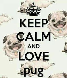 Love a pug.