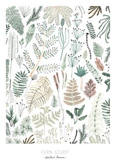 Poster Fern Study | OHMYHOME