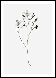 Campanula Flower, julisteet ryhmässä Julisteet  / Valokuvat @ Desenio AB (8496)