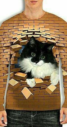Brick Lane, Cats, Animals, Brick Road, Gatos, Animales, Animaux, Animal, Cat