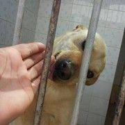 Adozione cani - Taglia Piccola Meticcia: Tita