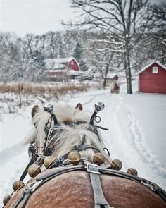 Great perspective.  How awesome would it be to leave your winter wedding in a horse drawn sleigh?