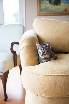 If your couch has seen better days, take a look at the many ways to get couches reupholstered inexpensively before you decide to go out a purchase a new one.