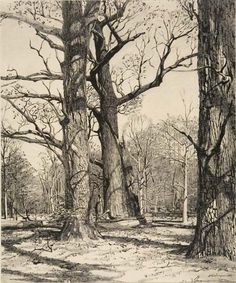 Stow Wengenroth — Woodland, New Hope, Pennsylvania, 1950 (drybrush drawing) ... Today's totally amazing discovery. Learn something new every day ...