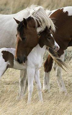 Fohlen und Mutter ... sind unzertrennlich.