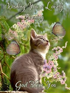 Good Evening Greetings, Cute Good Night, Good Afternoon, Cat Quotes, Kitty Cats, Positive Quotes, Blessed, God, Dios