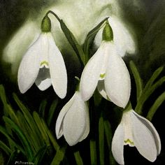 oil on canvas - snowdrops Bonsai, Floral Artwork, Ikebana, Oil On Canvas, Watercolor, Gallery, Flowers, Plants, Painting