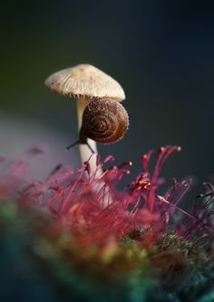 Mushroom: Macro Mushroom by Laura Pashkevich on 500px. #Snail #Nature
