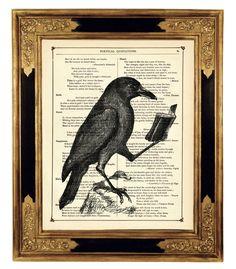 *Lesender Rabe mit Buch Krähe Vogel Zoologie Halloween - Kunstdruck auf antiker viktorianischer Buchseite*  Diese historische Illustration wurde auf eine antike Buchseite gedruckt, die aus einem...