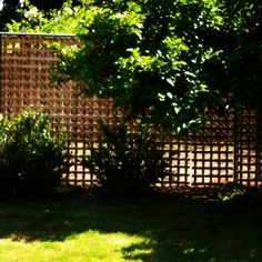 Easy way to cover up that old chain link fence. I used cedar latice and wired to the existing chain link.