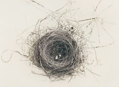 I have this thing with nests....