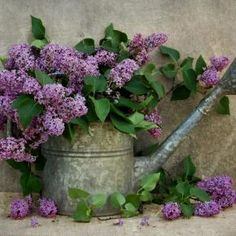 Lilac Bouquet Antique Watering Can