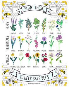 Bee-friendly herbs, perennials and annuals. SAVE THE BEES! No bees, no food. Stop using chemicals! Bee Friendly Plants, Bee Friendly Flowers, Save The Bees, Plantation, Bee Keeping, Dream Garden, Geraniums, Gardening Tips, Organic Gardening