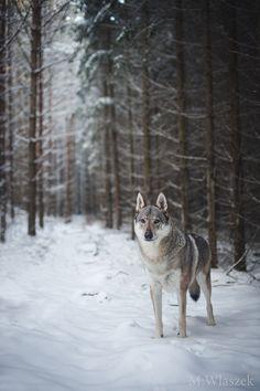 handsomedogs: Magdalena Wlaszek | Liskamm