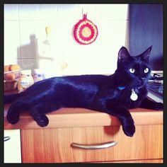 Il mio Wiki! #cat #gatto #gatti #pet #animal #panter   #catsagram #catstagram #instagood #kitten #kitty #kittens #pet #pets #animal #animals #petstagram #petsagram #photooftheday #catsofinstagram #ilovemycat #instagramcats #nature #catoftheday #lovecats #furry #lovekittens #adorable #catlover #instacat