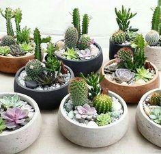 Succulent Display, Succulent Arrangements, Cacti And Succulents, Planting Succulents, Cactus Plants, Cactus Cactus, Mini Cactus Garden, Cactus Flower, Propagate Succulents