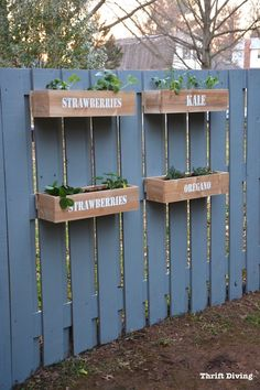 How to paint a fence and make stenciled cedar planters for a DIY hanging fence garden. Super easy to make! See the full tutorial and YouTube video.   Thrift Diving
