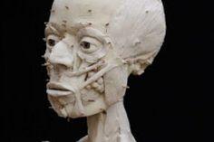 Αϊνώ, οι θρυλικοί Έλληνες της Ιαπωνίας Statue, Blog, Blogging, Sculptures, Sculpture