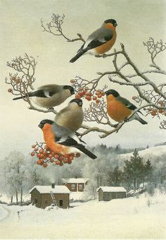 Bullfinches and rowan tree / Punatulkkuja pihlajassa 1890 Ferdinand von Wright Bird Artists, Bullfinch, Christmas Bird, Little Critter, Christmas Paintings, Bird Illustration, Vintage Birds, Beautiful Birds, Animal Drawings