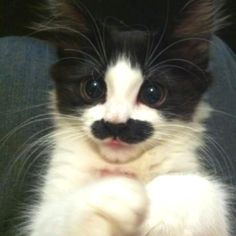 it looks like the cute thing has a mustash