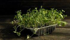 Ez jobb, mint a méregdrága bolti. Mint, Herbs, Plants, Food, Essen, Herb, Meals, Plant, Yemek
