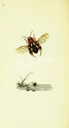 073-Spiders, lycosa, pardosa      ...