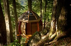 builder Joel Allen's egg-shaped treehouse suspended above a hemlock tree