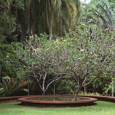 Raised bed with builtin seating - Jardim do Jasmim Manga. Garden Pool, Tropical Garden, Water Garden, Garden Landscaping, Contemporary Garden Design, Contemporary Landscape, Landscape Architecture, Landscape Design, Sustainable Architecture