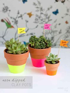 DIY neon dipped pots with succulents Summer Deco, Teacher Appreciation Gifts, Teacher Gifts, Do It Yourself Quotes, Neon Flowers, Cool Dorm Rooms, Succulent Pots, Plant Pots, Potted Plants