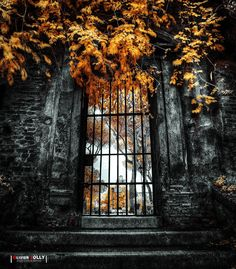 Behind The Gate by bamboomix.deviantart.com on @DeviantArt