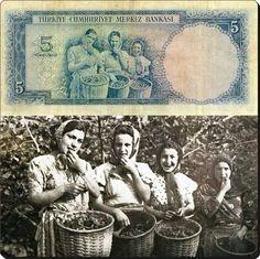1952 yılında tedavüle giren, Fındık toplayan kızlar temalı 5 liralık banknot ve altta gerçek fotoğrafı. Turkish Art, Old Pictures, Old Photos, Vintage Photos, Turkey History, Turkish People, Ottoman Empire, Historical Pictures, Shopping