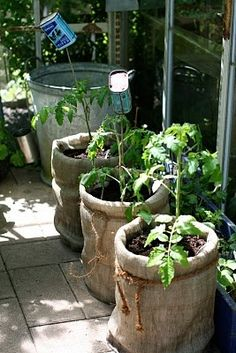 Inexpensive planters / plastic buckets covered by a burlap sack. Creative and cute